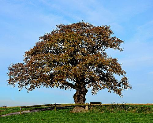 Jeder, der Gott liebt, ist wie ein Baum, der im Vorhof des Tempels gepflanzt wurde und dort gedeihen kann. - Psalm 92,14